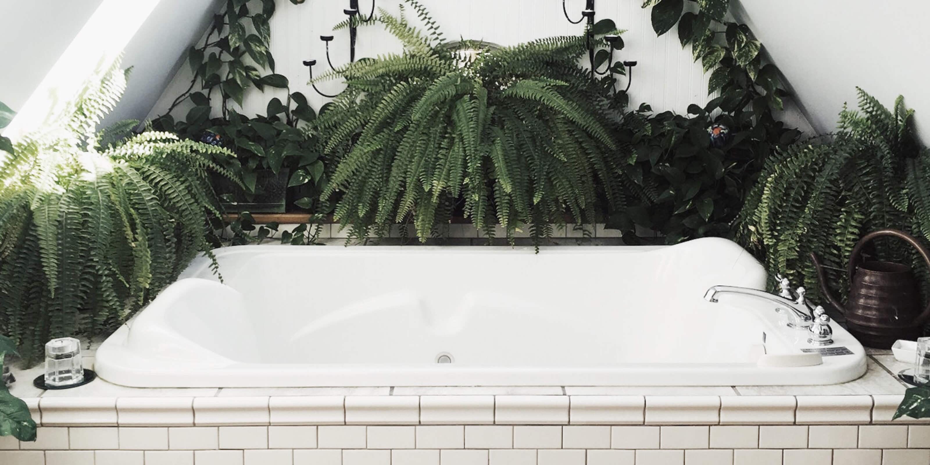 bathtub, plants