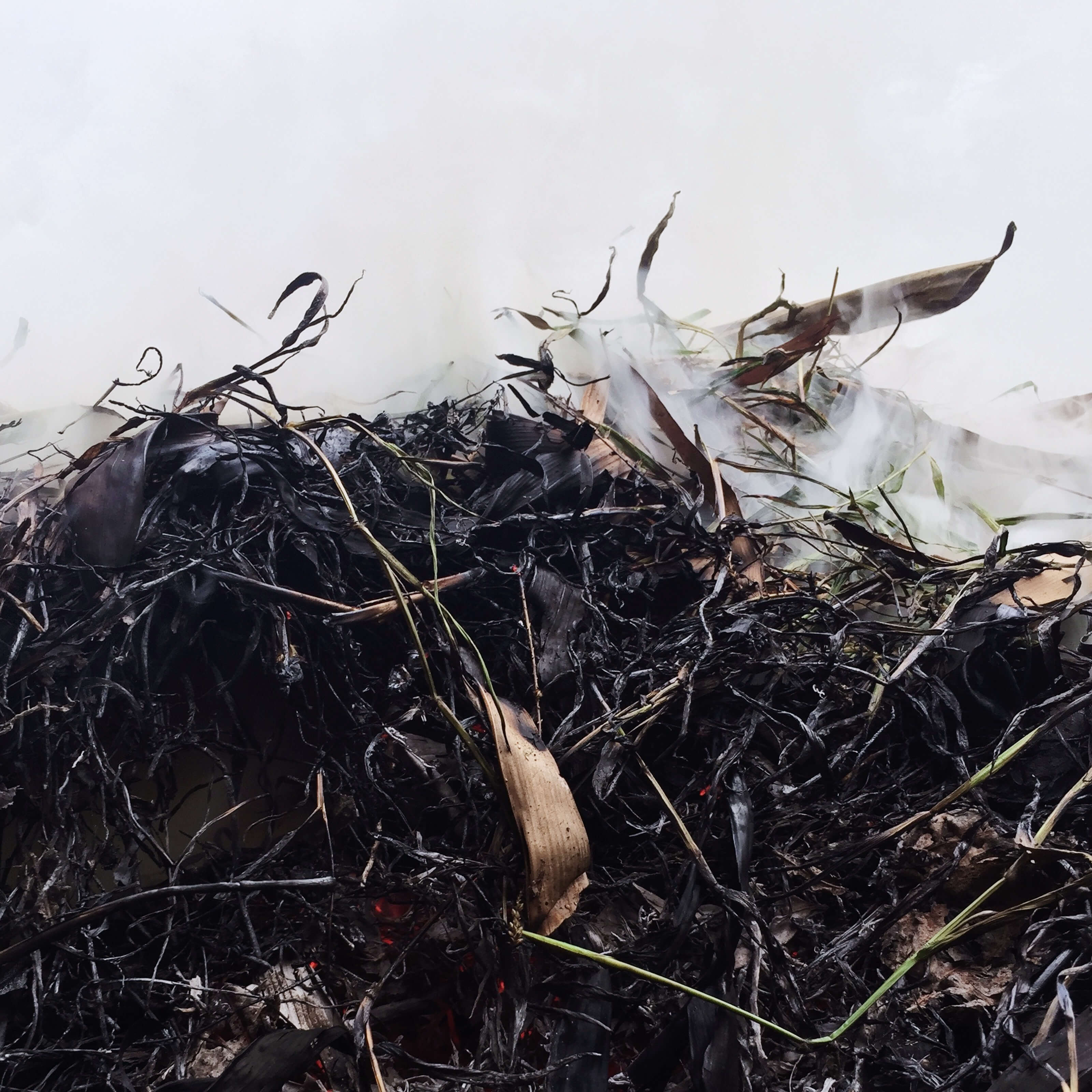 compost pile, humus