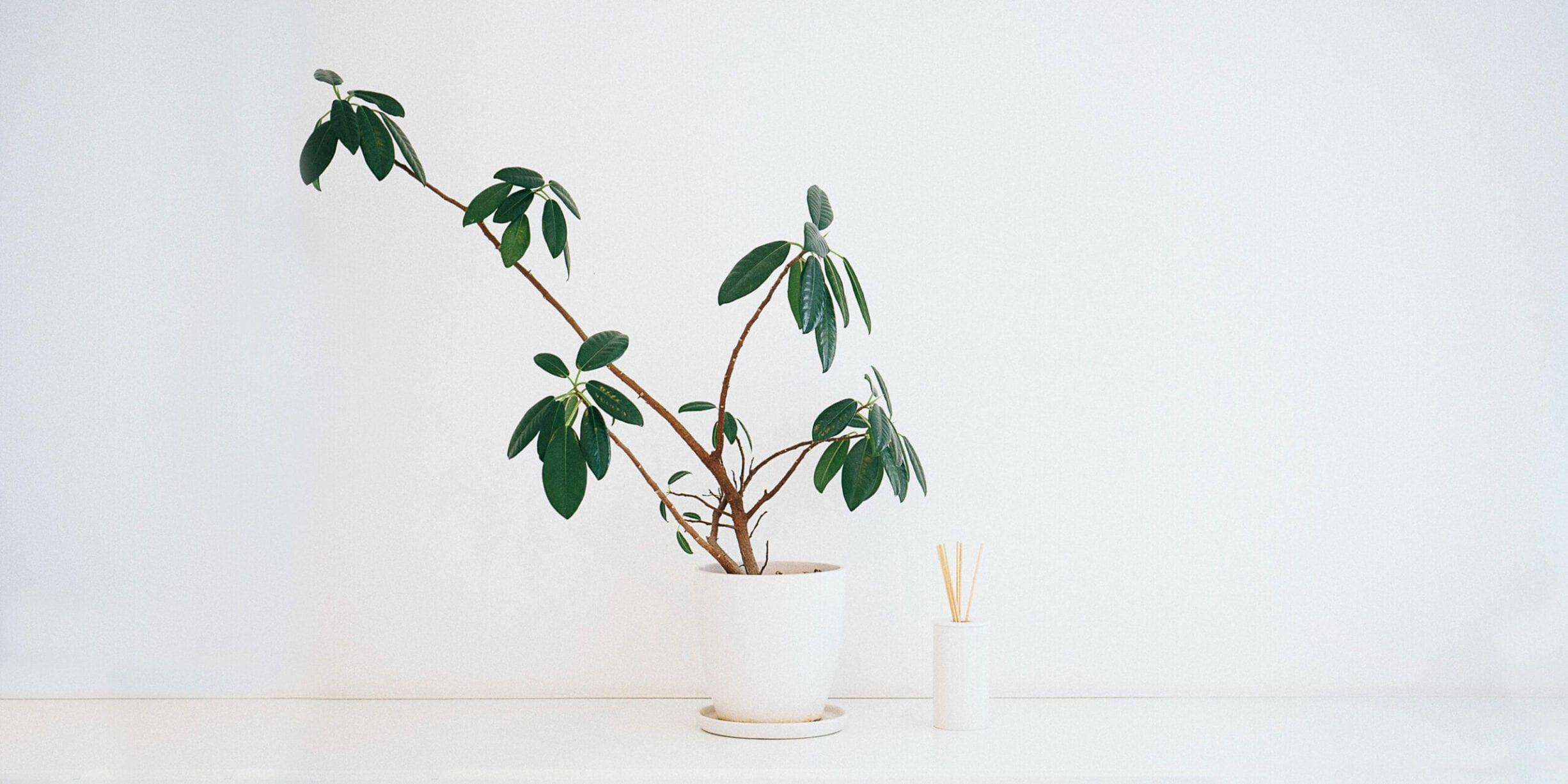 house plant, incense sticks