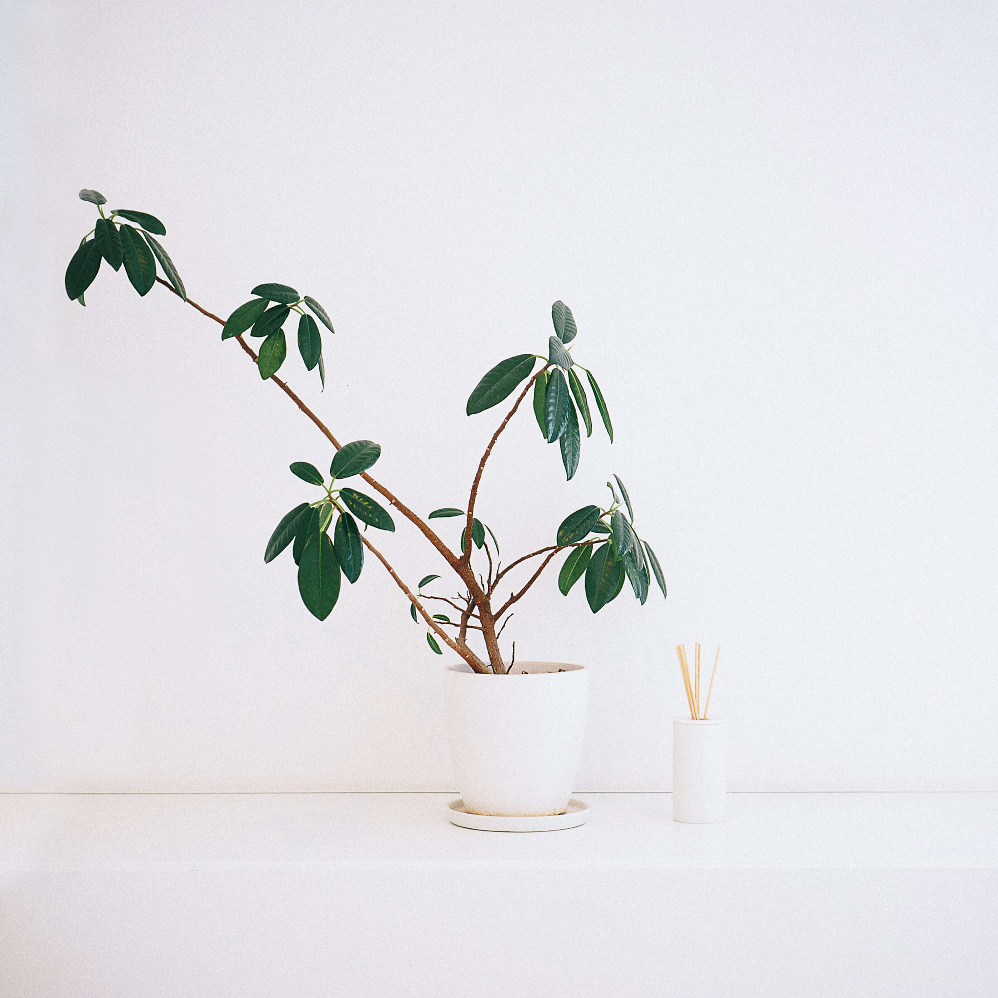 house plant, incense sticks