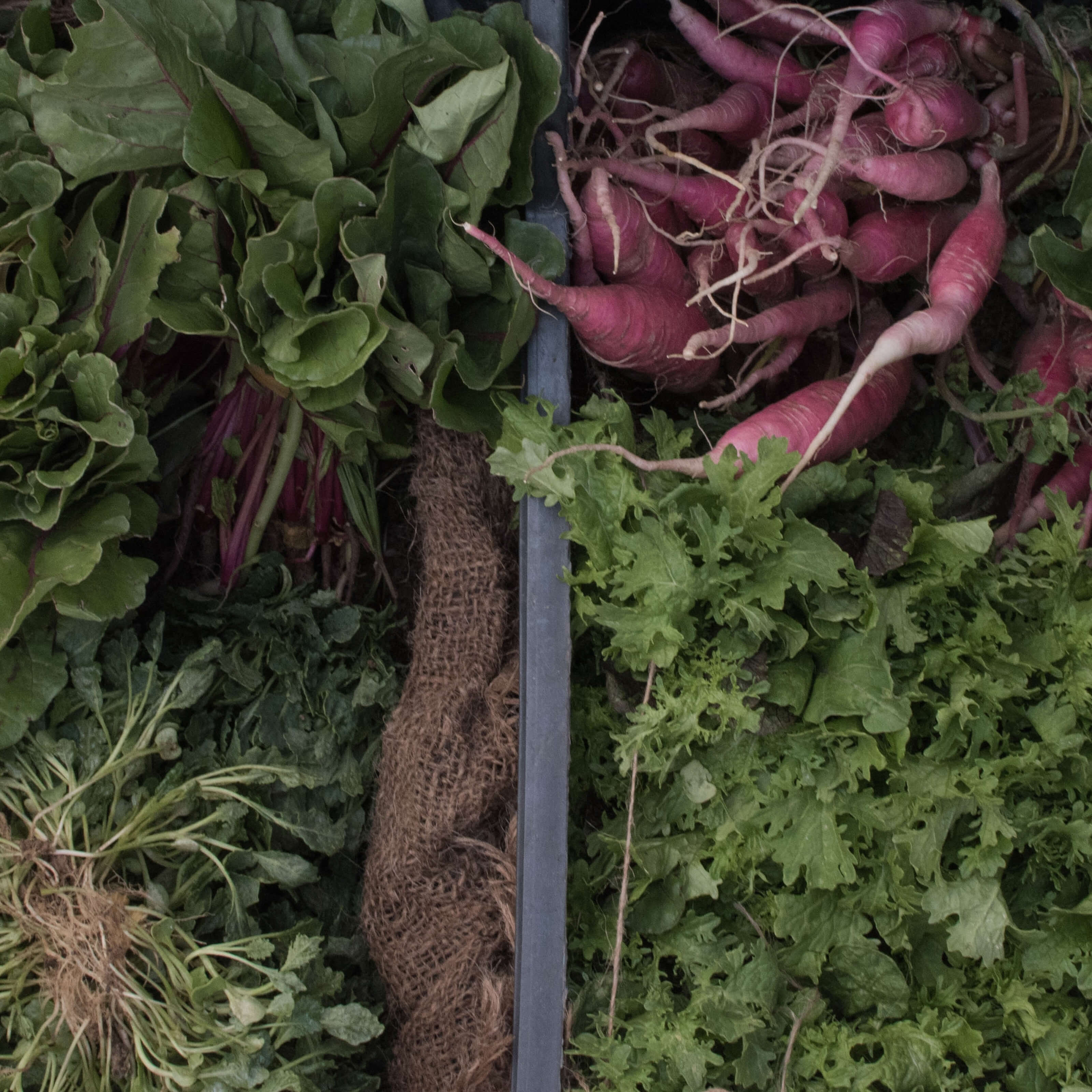 garden, lettuce, turnips