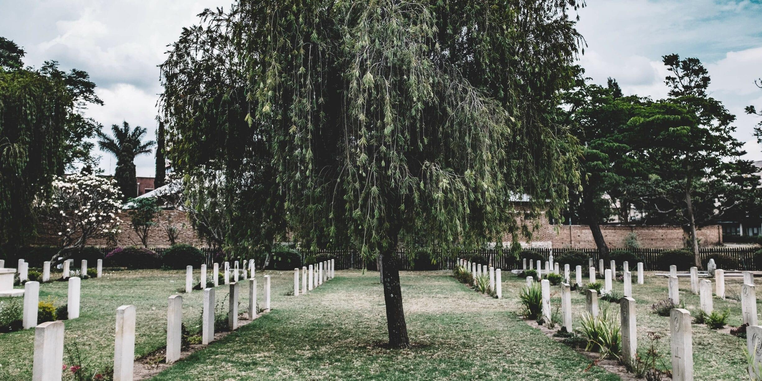 tree between rows of gravestones