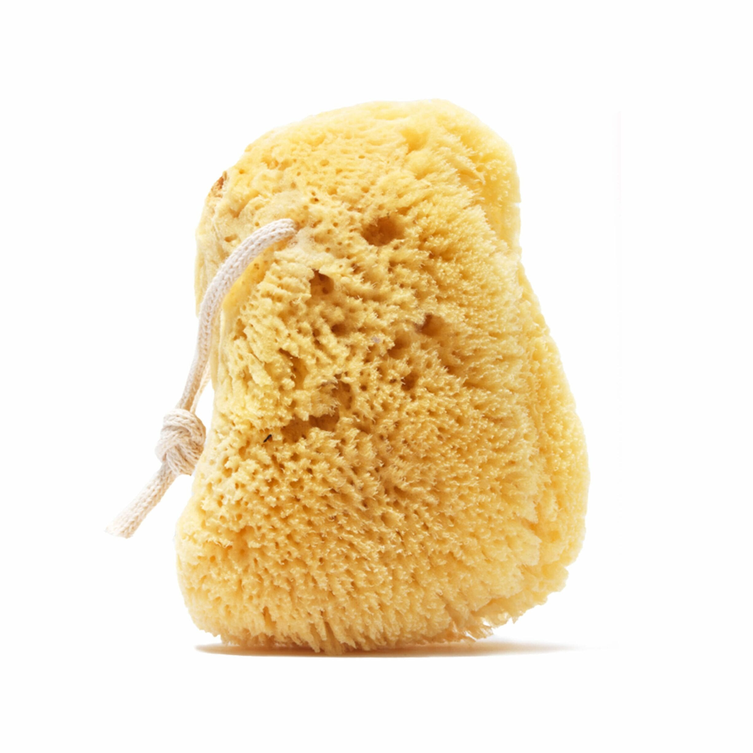 Get Clean: Use a Sea Sponge, Not a Shower Pouf or Washcloth