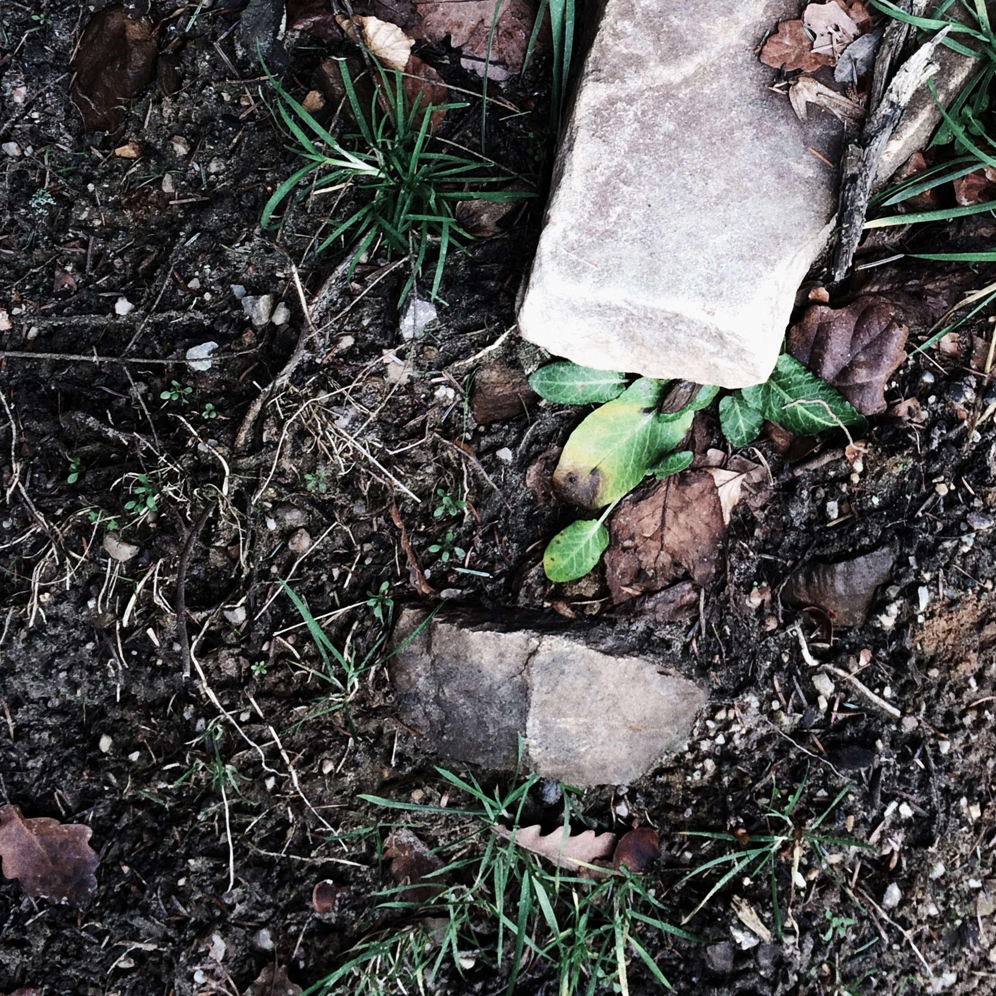 grass, dirt, compost, rocks
