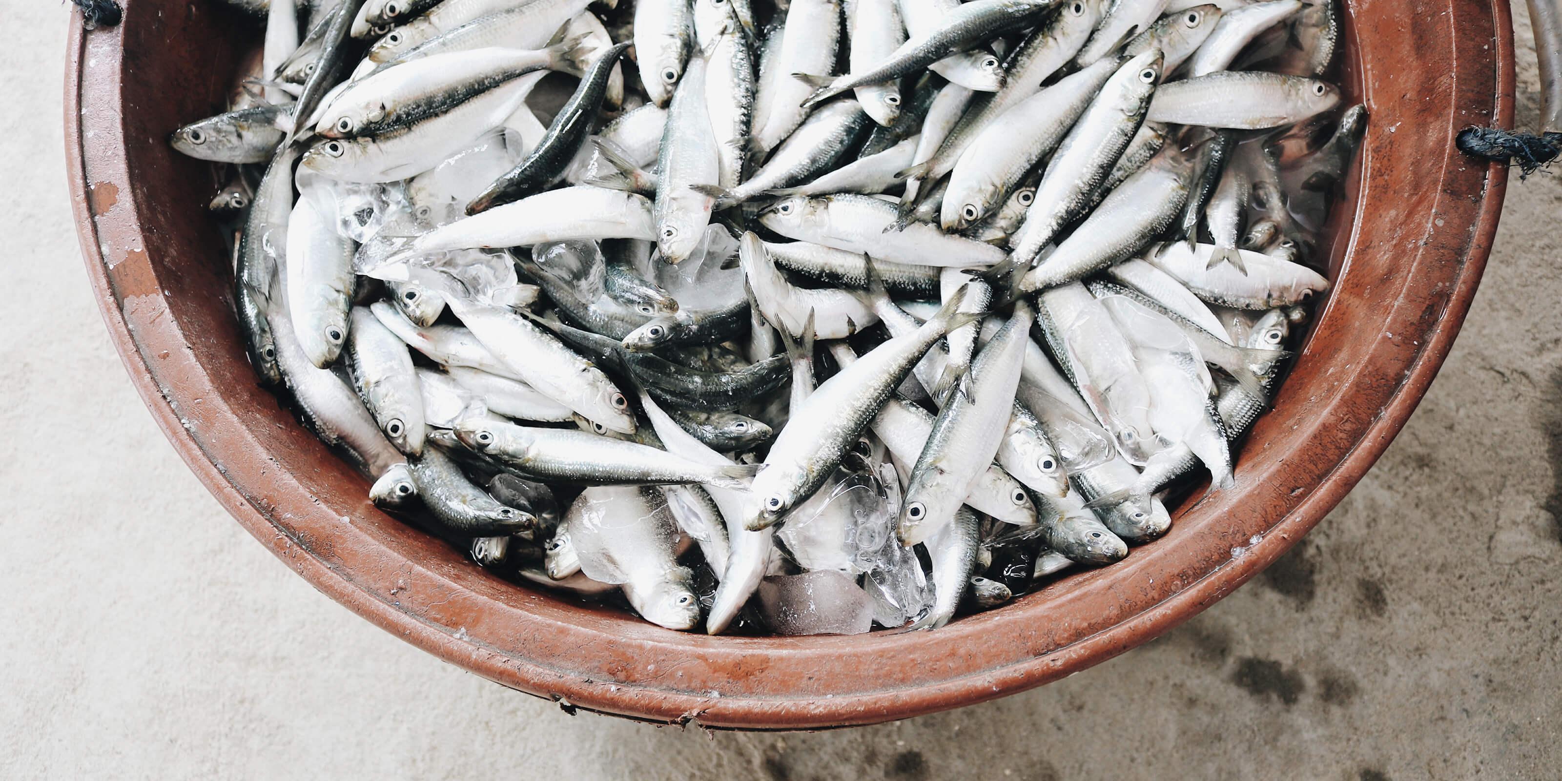 bucket full of sardines