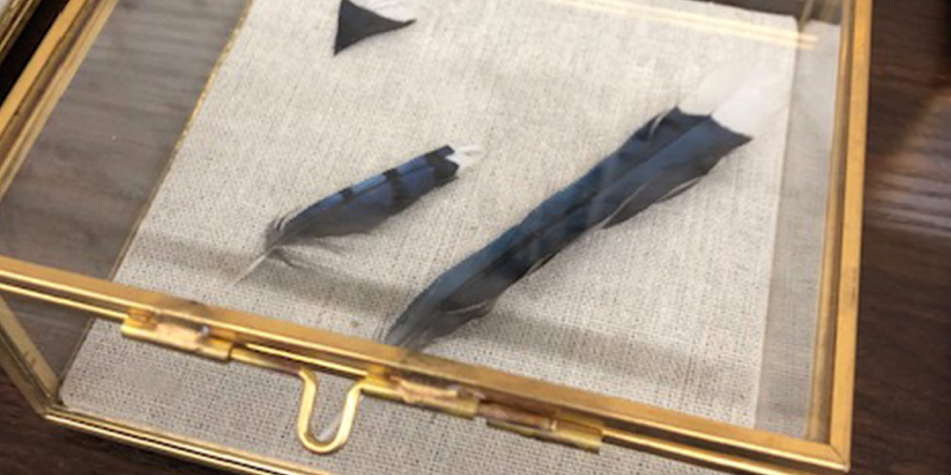 blue feathers in glass case
