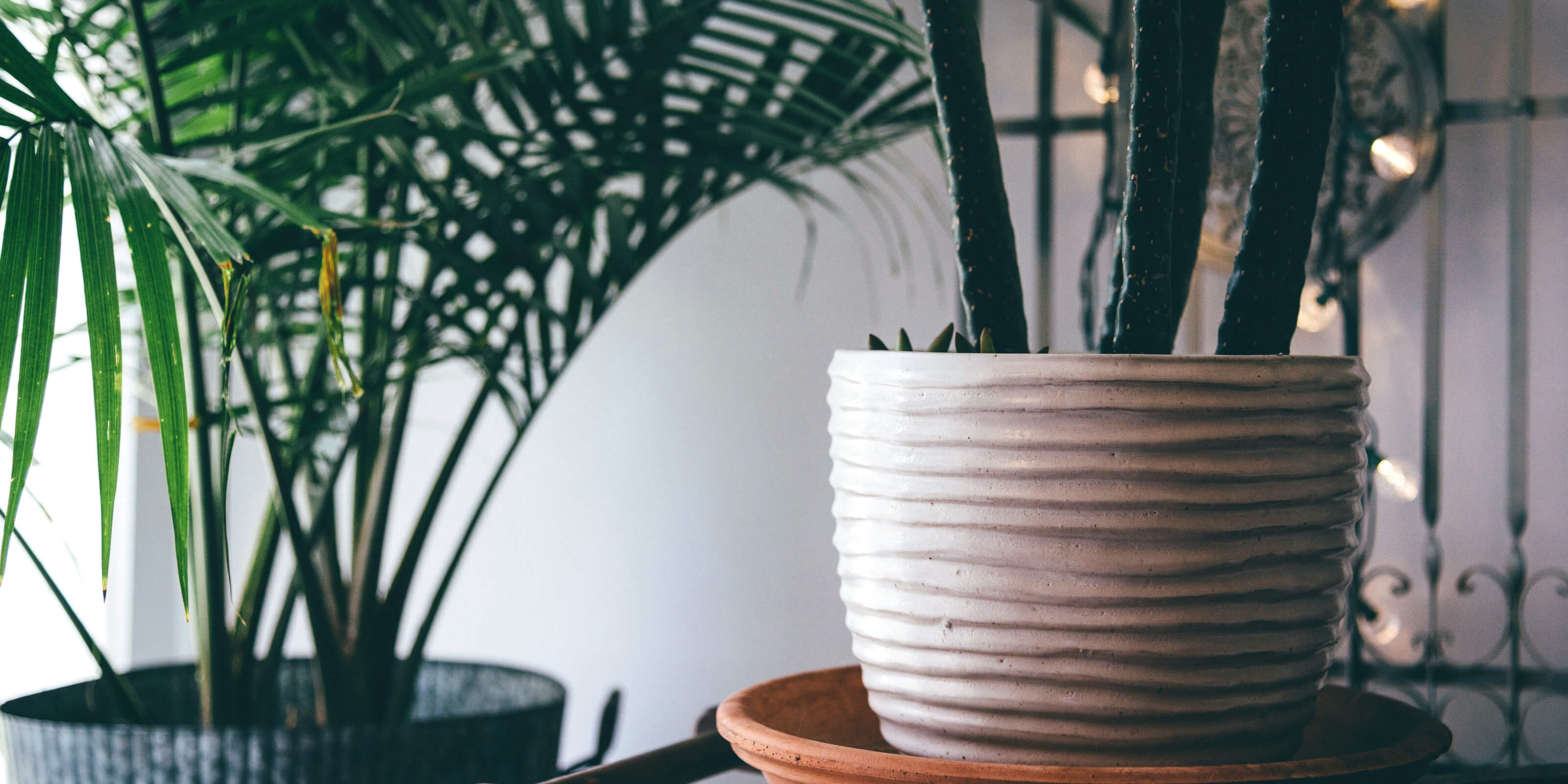potted plant in home