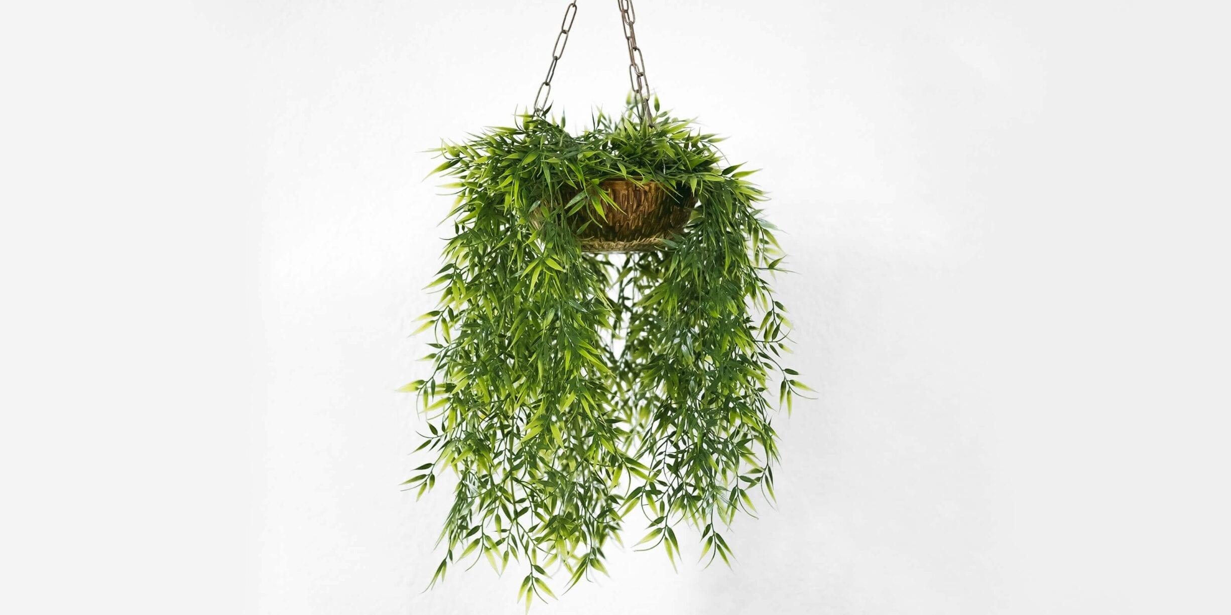 hanging plant in basket