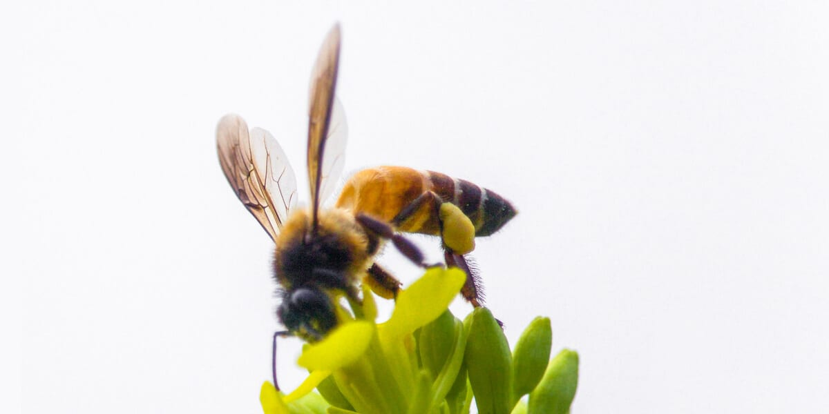 bee perched on grass