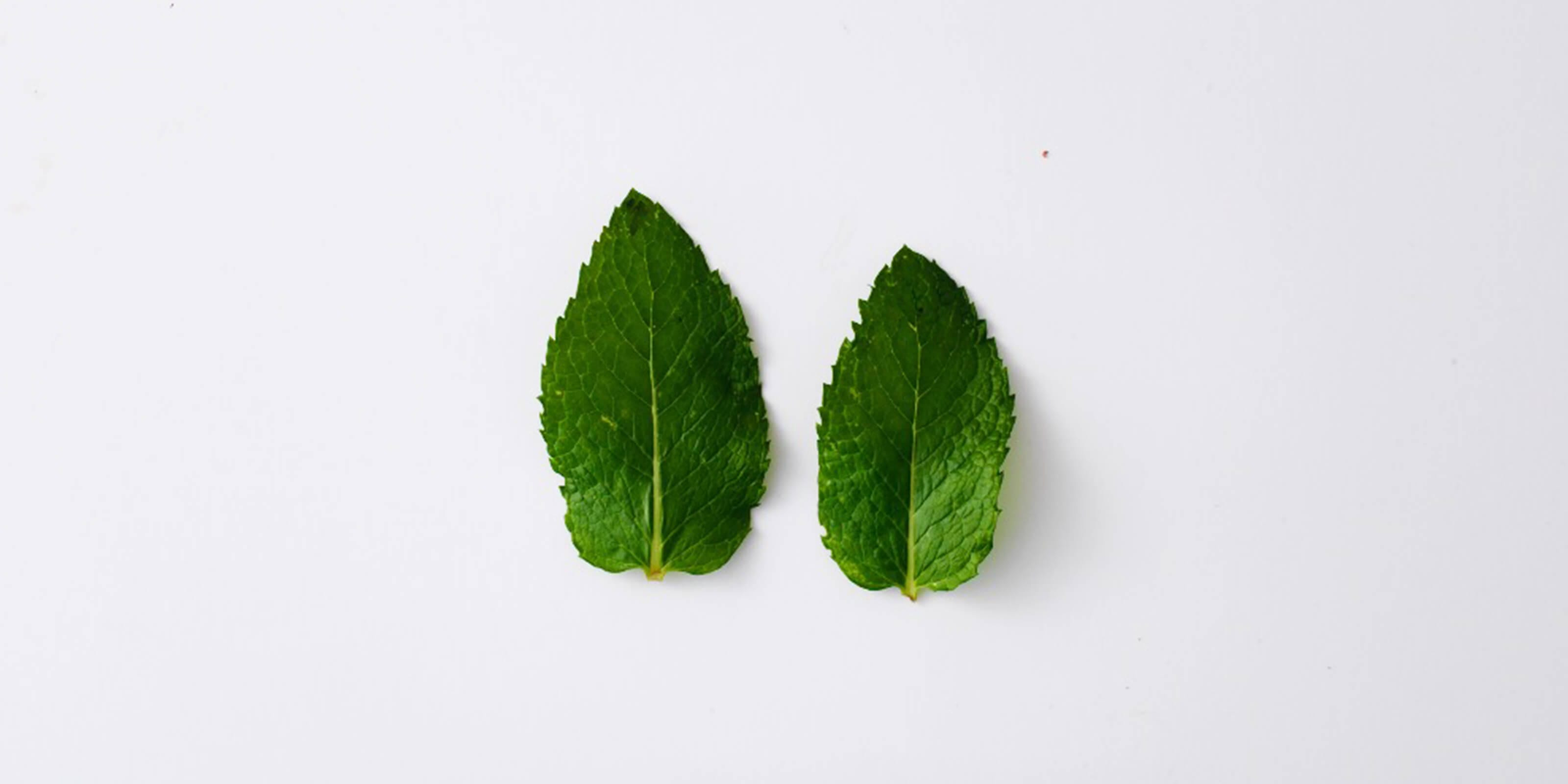 two peppermint leaves