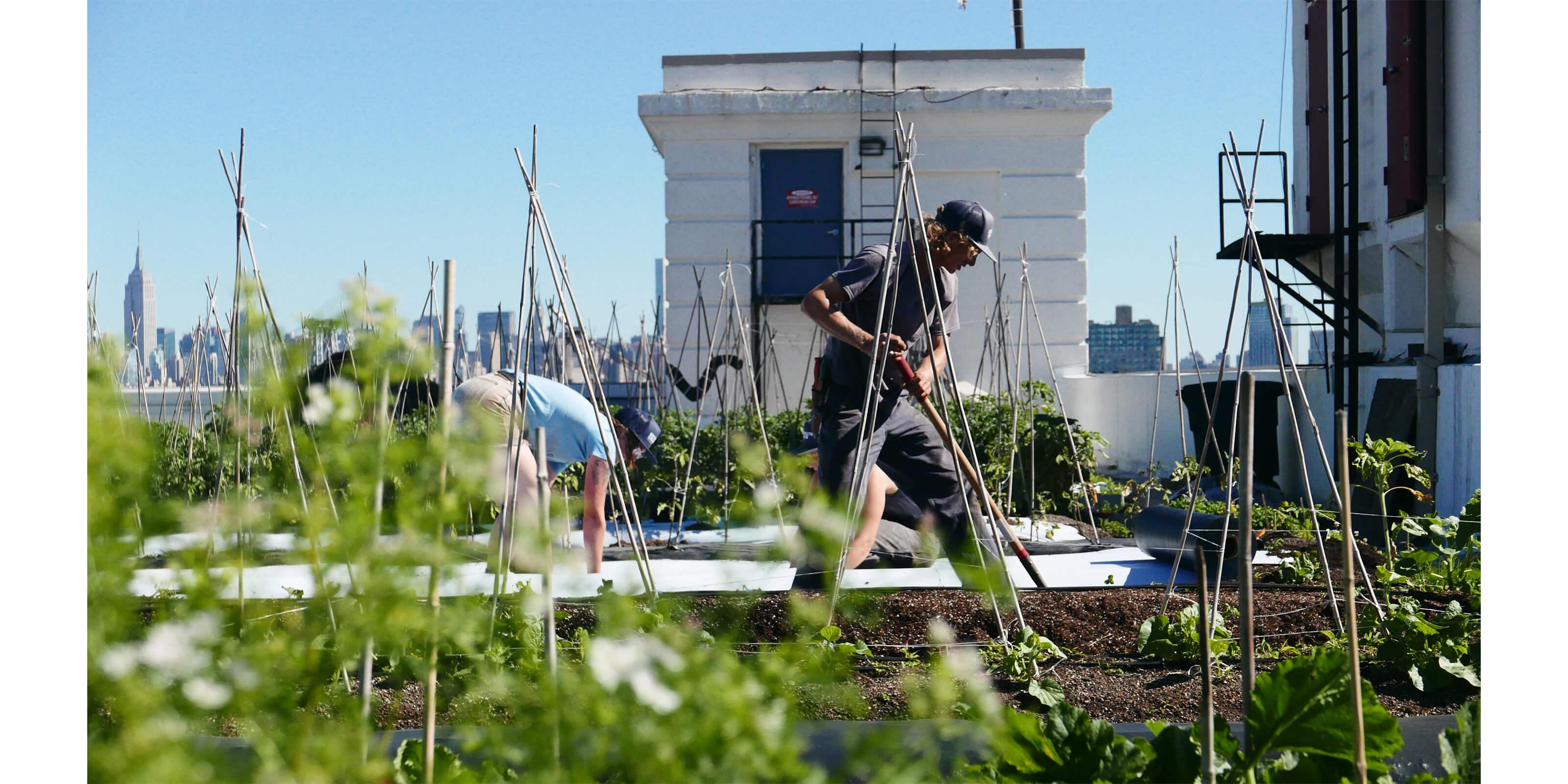 men working on brooklyn grange roof
