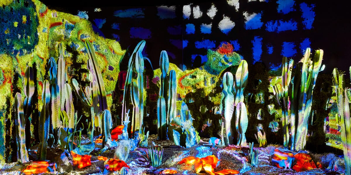arcadia earth exhibit, cacti, rocks, moss wall