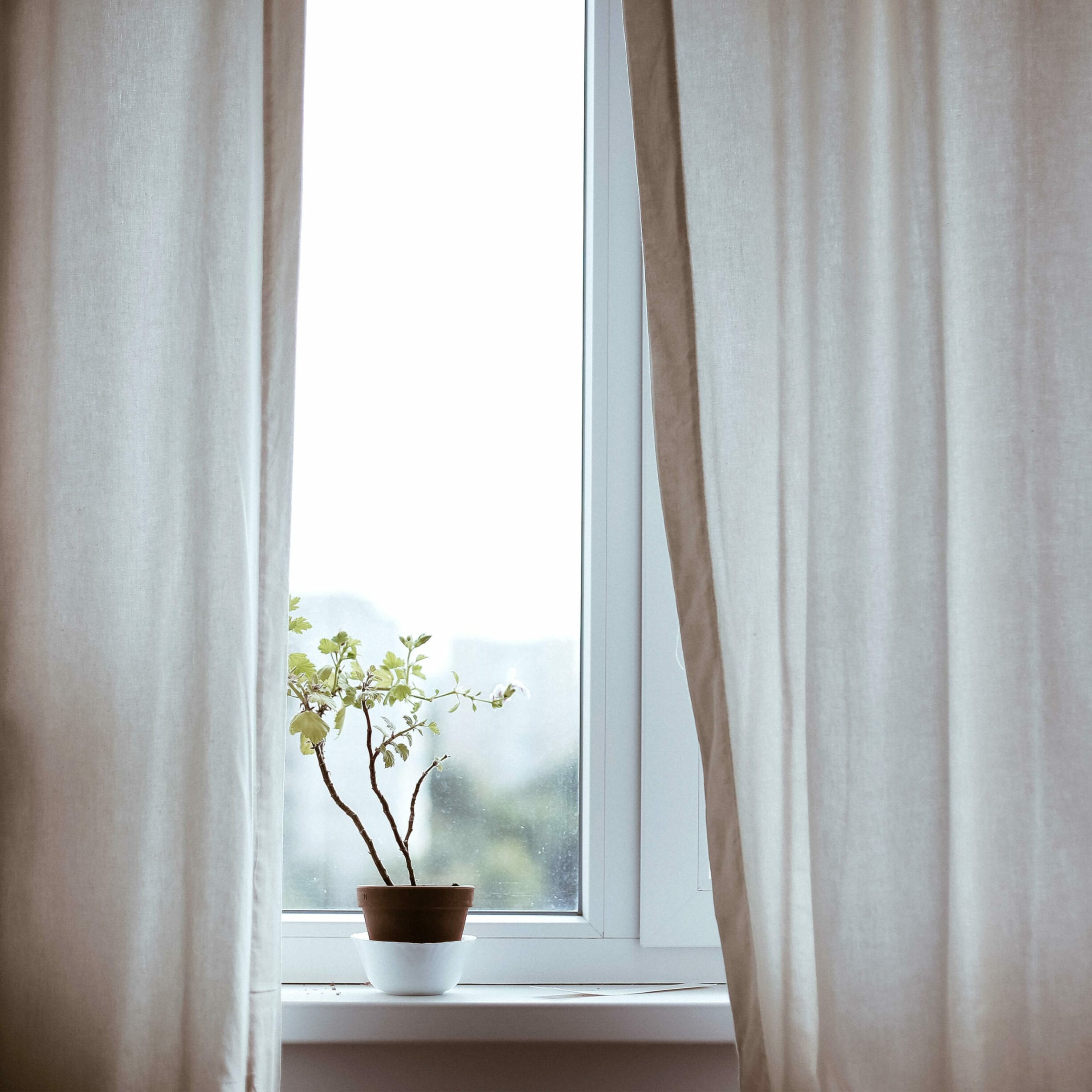 plant on windowsill, curtains