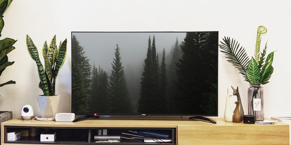 trees on television screen, plants, tv stand