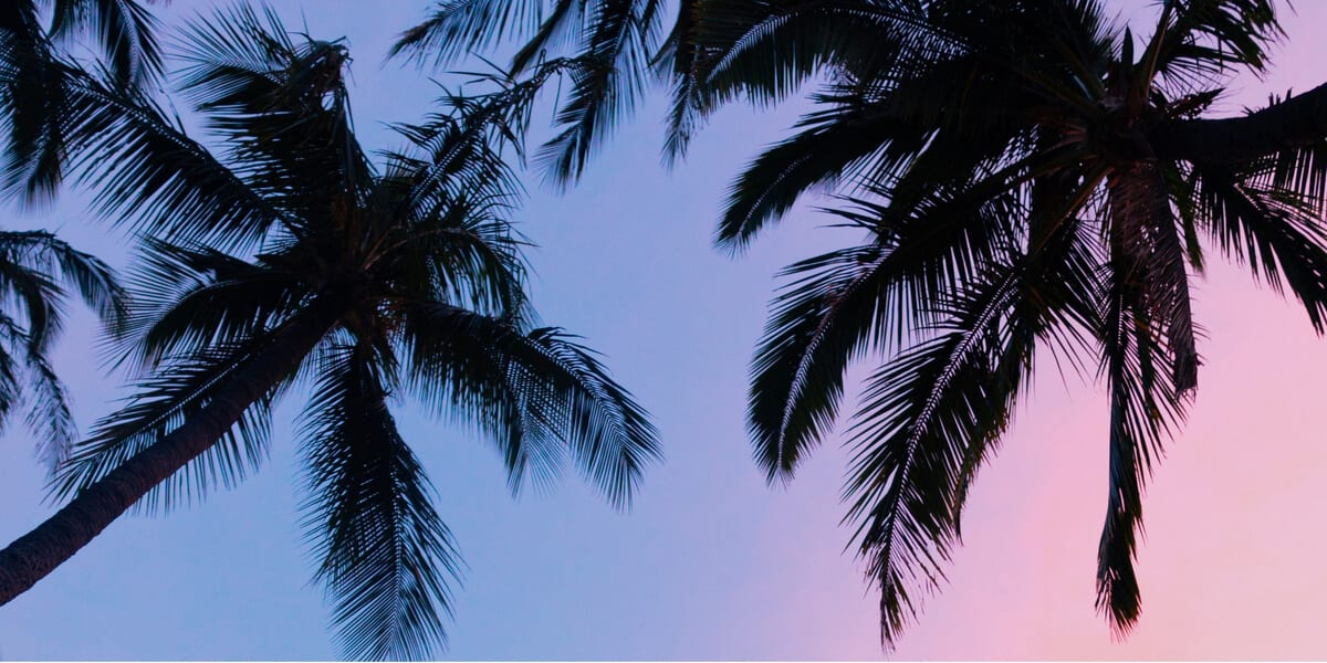 palm trees during sunset, normal is over, documentary