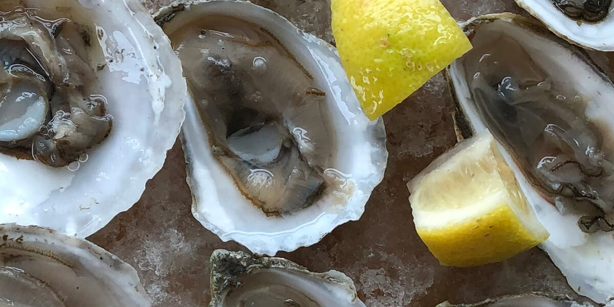 fresh raw oysters with lemon