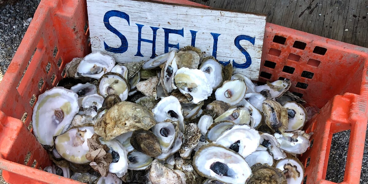 crate full of oyster shells
