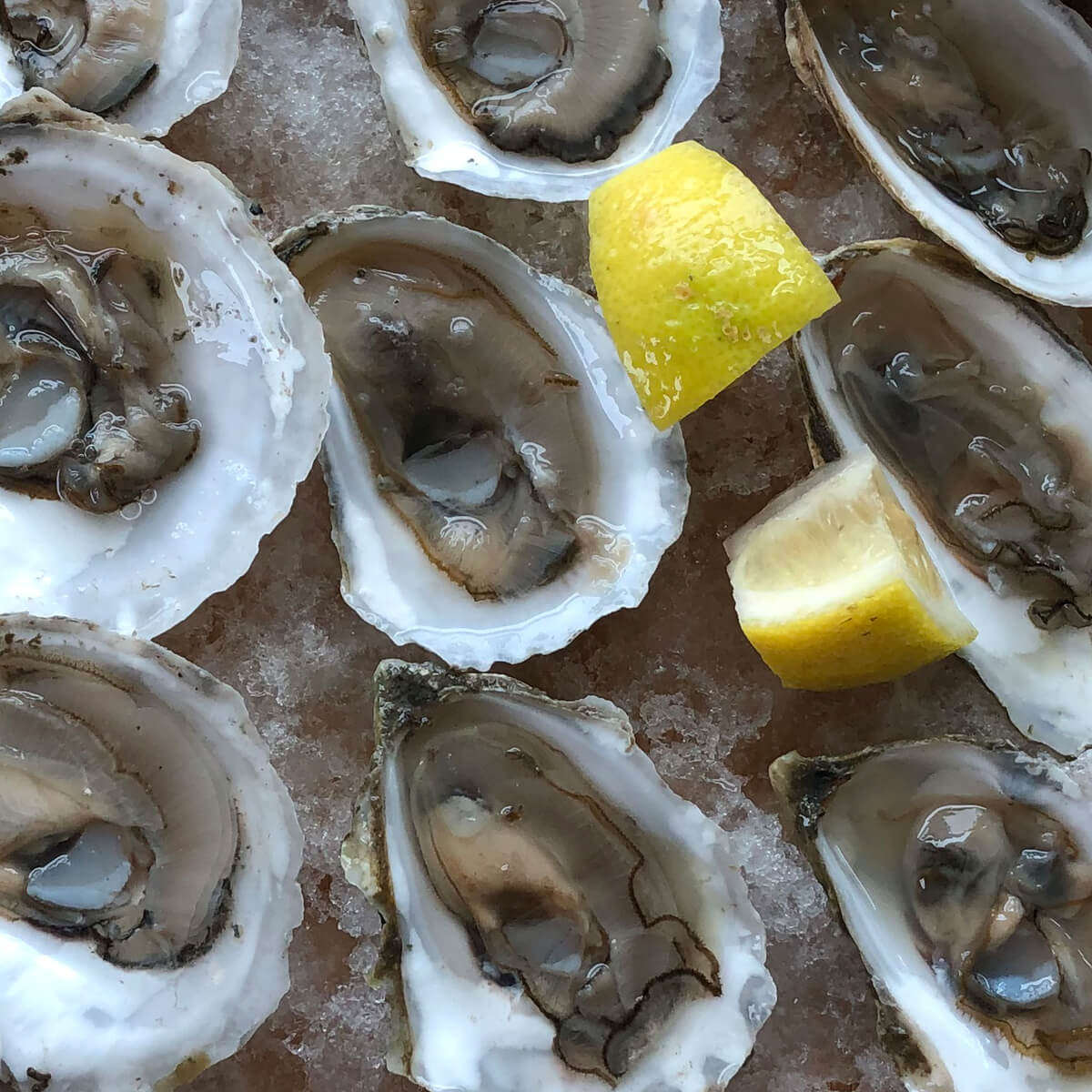 What My Trip to Maine Taught Me About Oysters and Sustainability