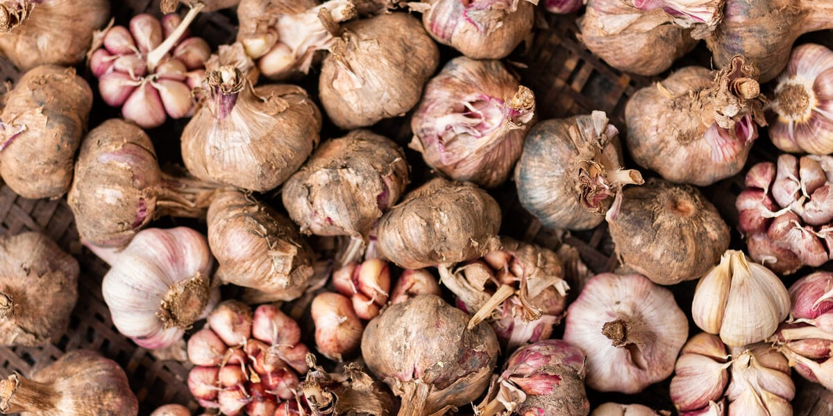 garlic in compost