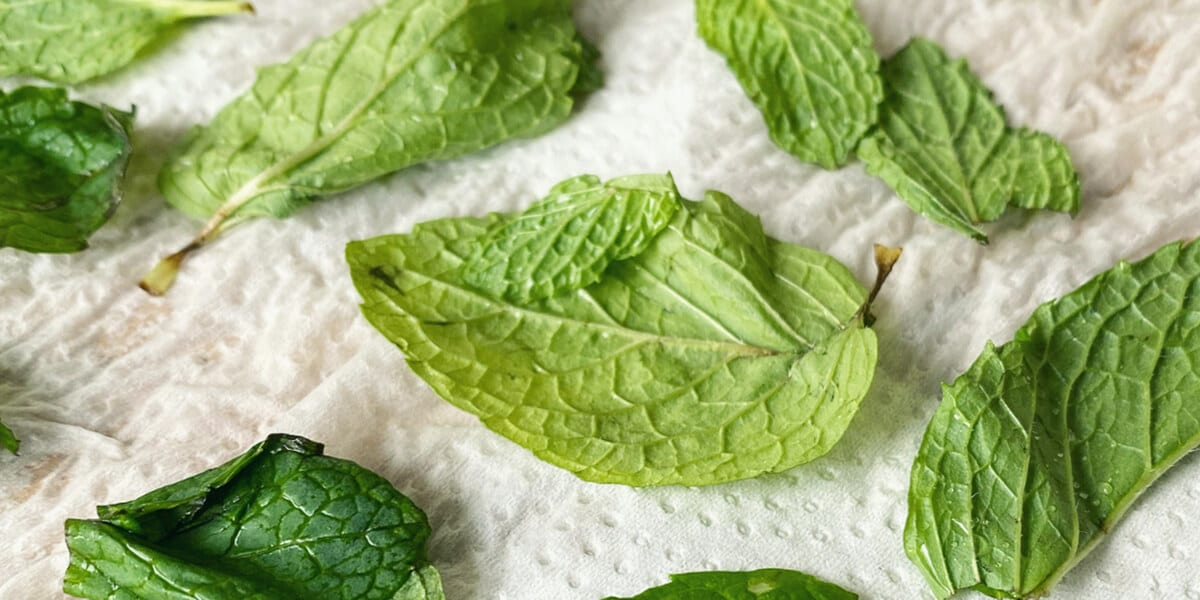 peppermint leaves on a paper towel