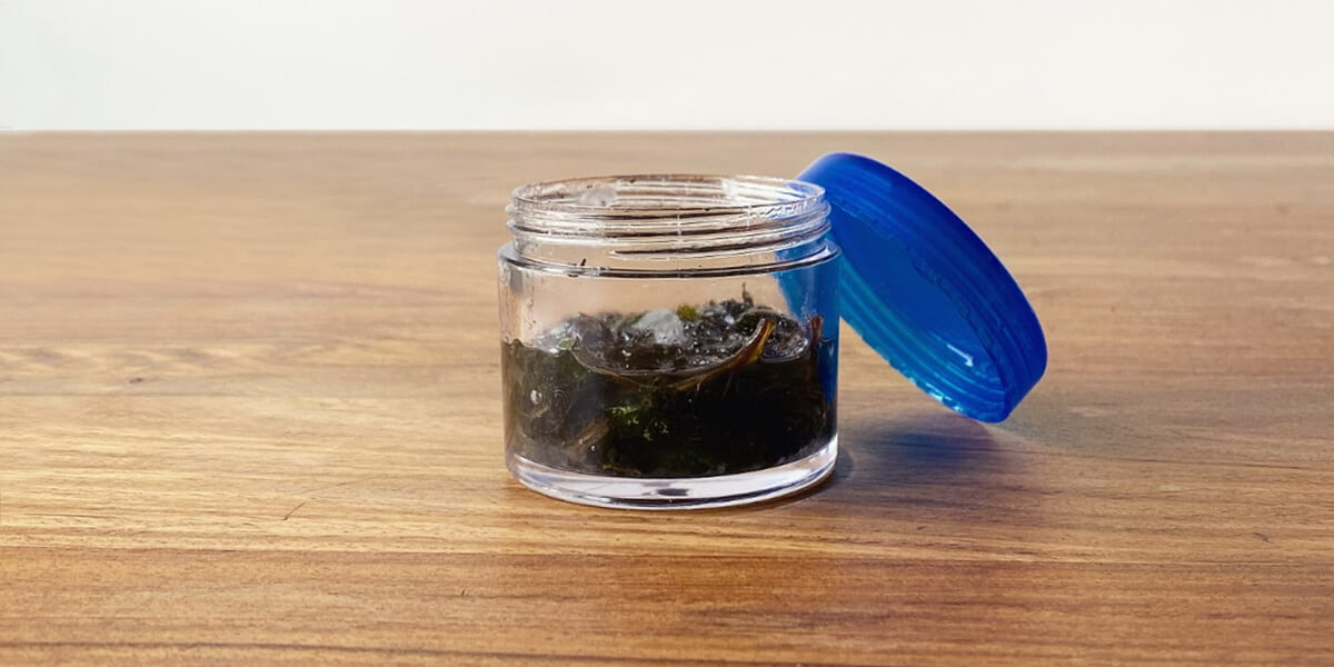open container with mixed peppermint leaves and carrier oil, blue cap