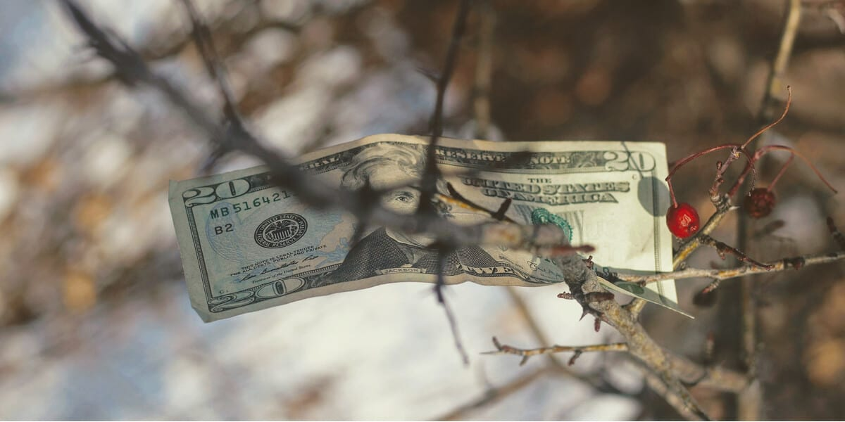 20 dollar bill in a tree