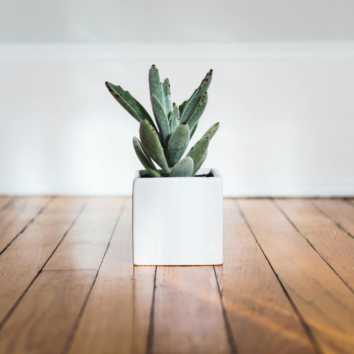 potted plant on the floor
