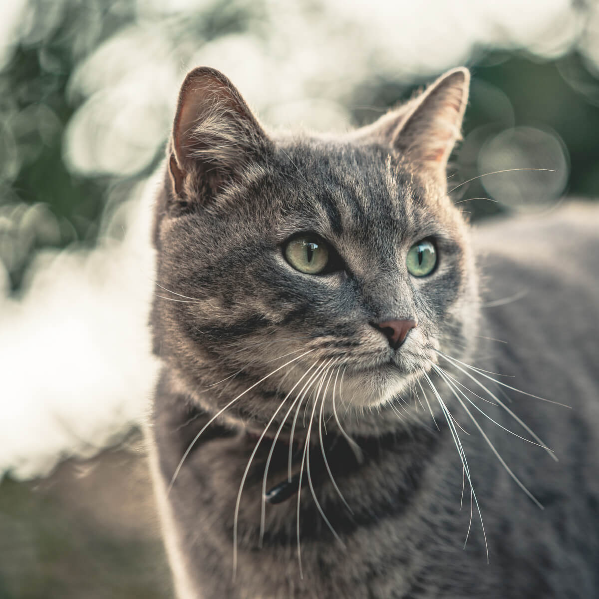 Is Peppermint Oil Safe for Cats? Here Are the Risks