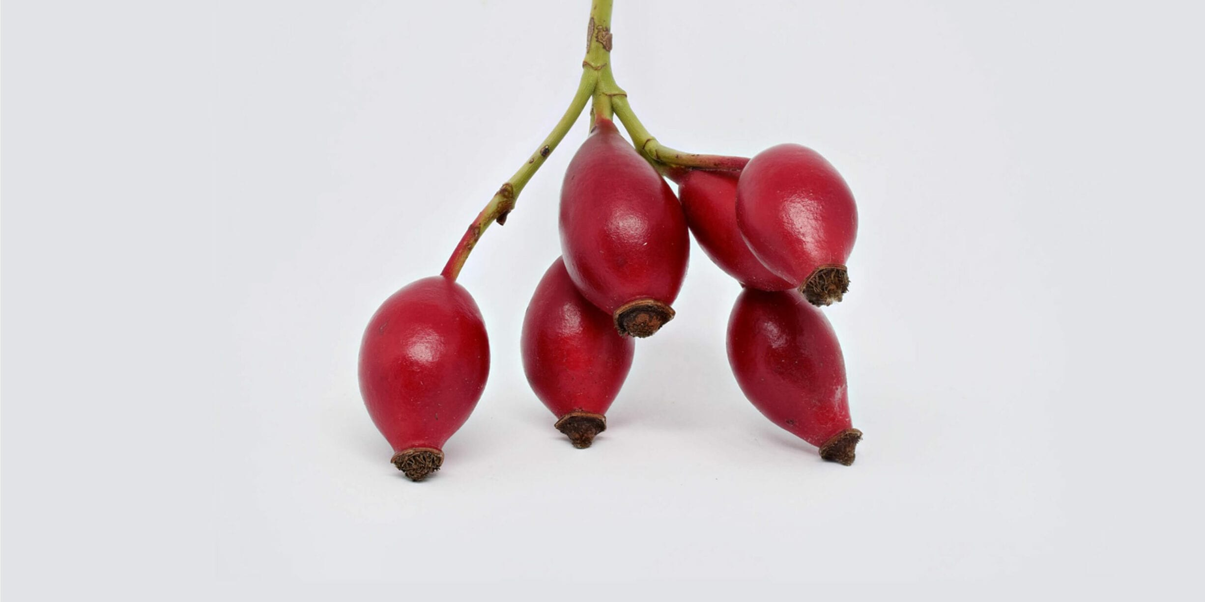 rosehip fruits on plant