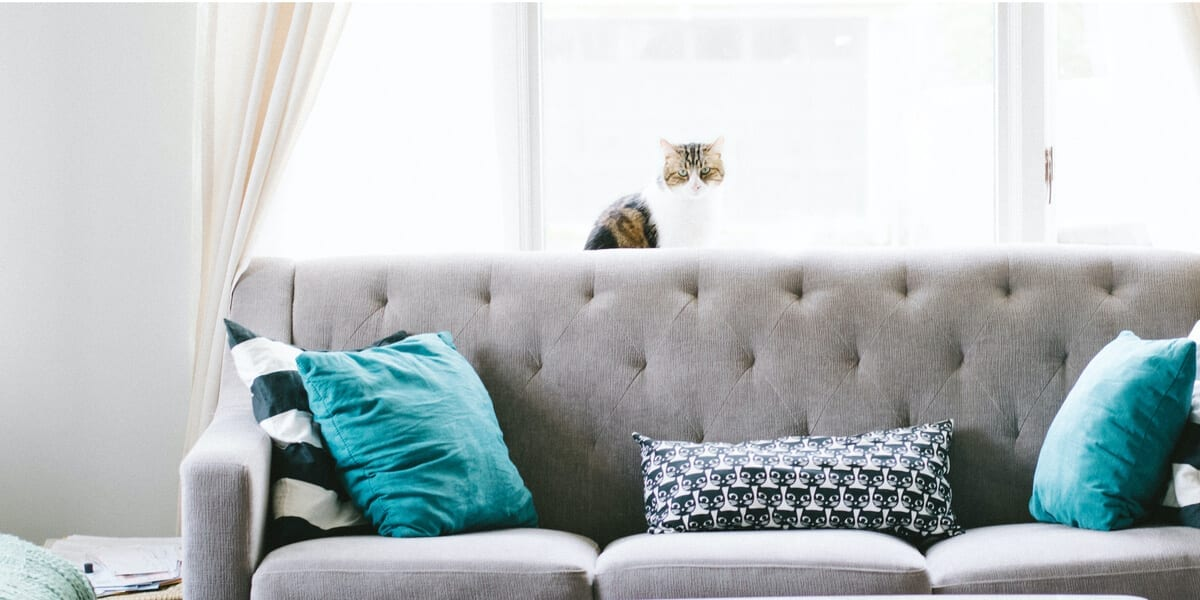 living room with a gray couch with three pillows, table and cat