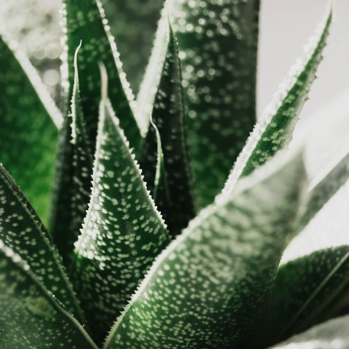 How to Use Aloe Vera for Acne: 6 Ways to Get Clear Skin