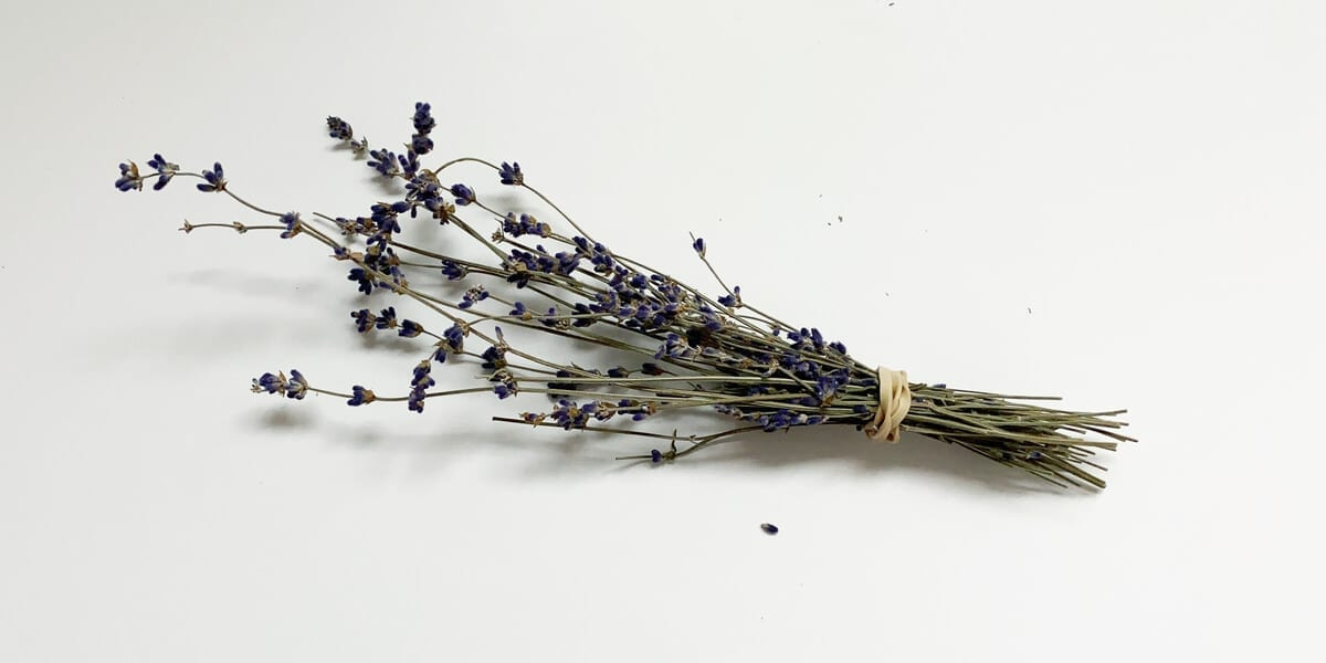 bundle of lavender with rubber band