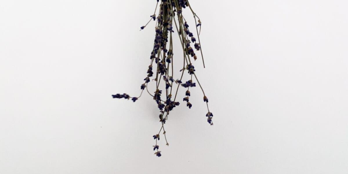 lavender bundle upside down