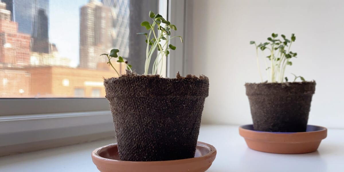 two plants growing in pots on a windowsill