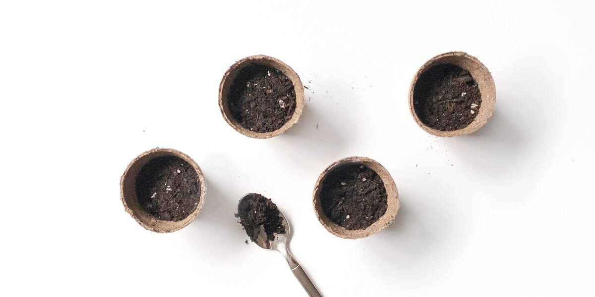 plant containers with soil and seeds and a spoon