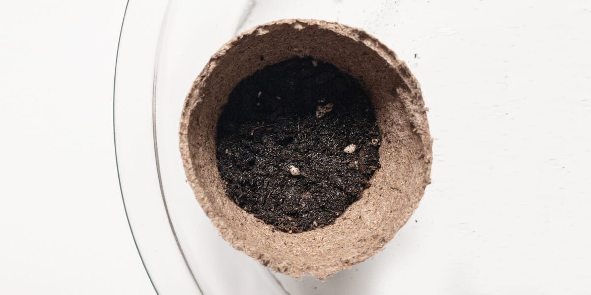 plant container with soil
