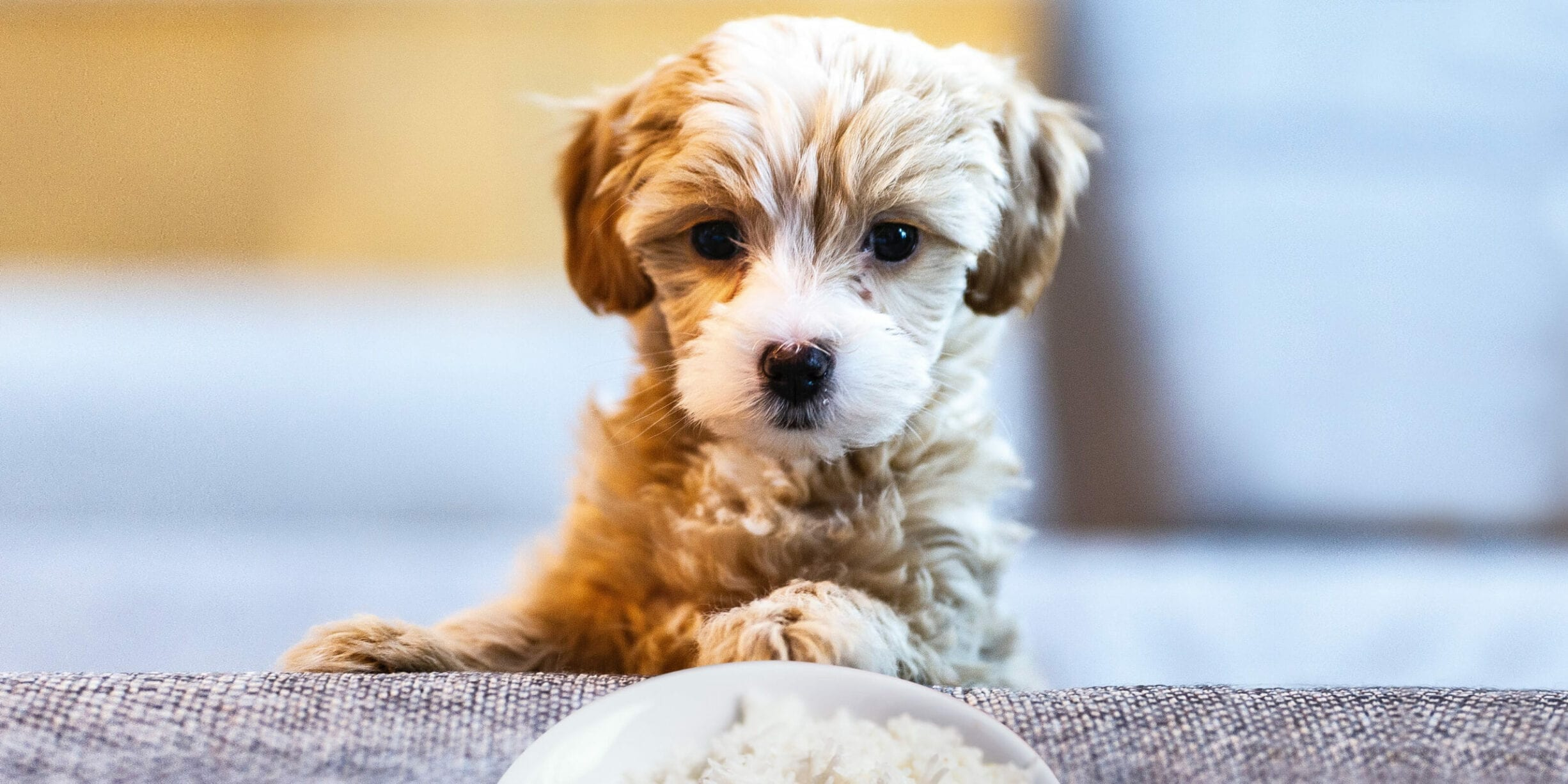 Can Dogs Eat Rice? Feeding Your Dog