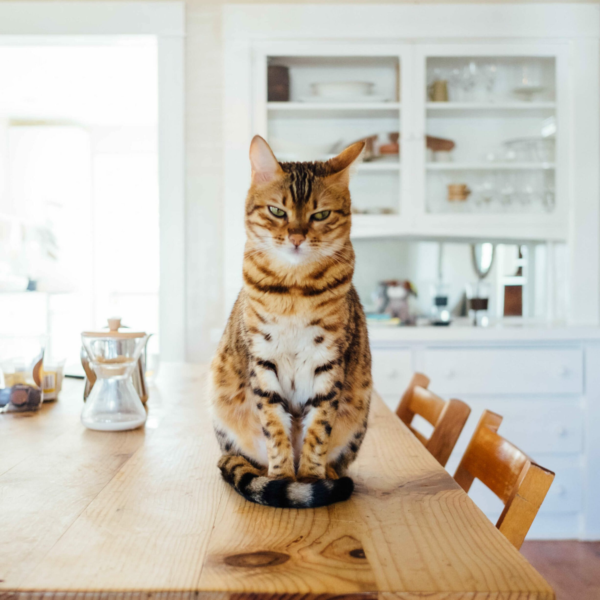 cat sitting on a wooden table
