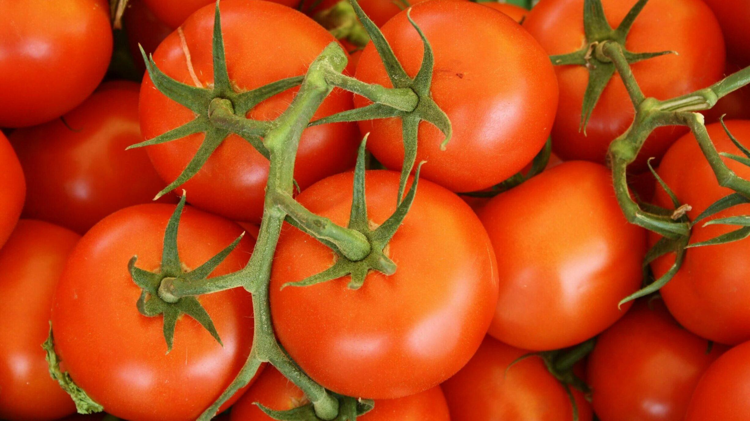 fresh tomatoes on a vine