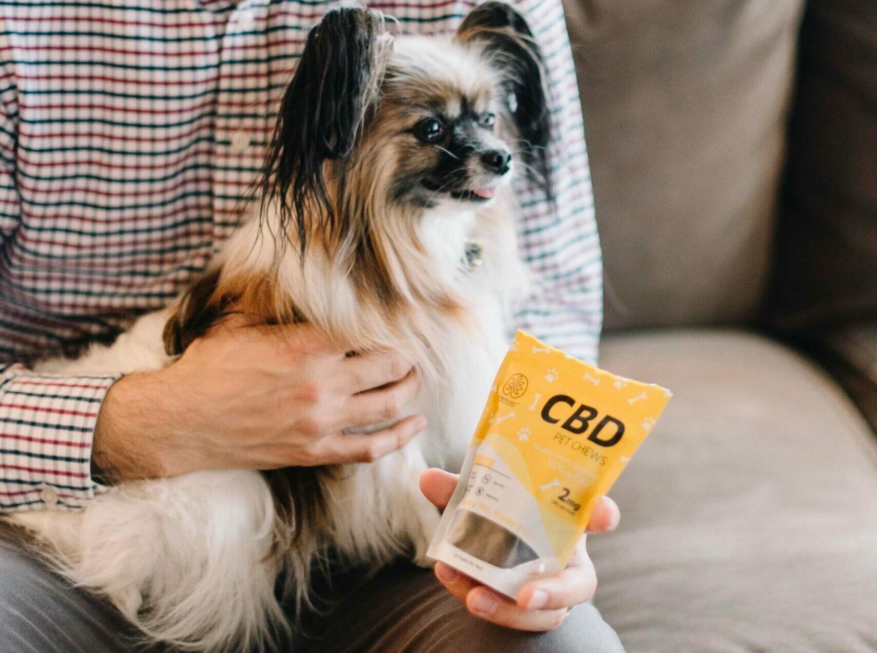 dog sitting on human lap, hand holding CBD dog treats