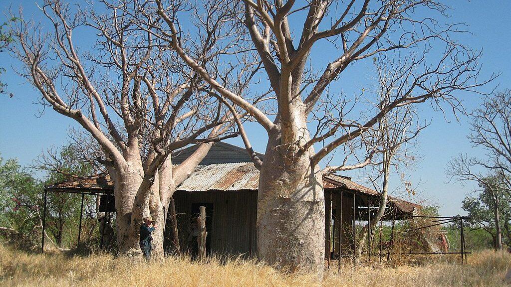 homestead cabin in woods