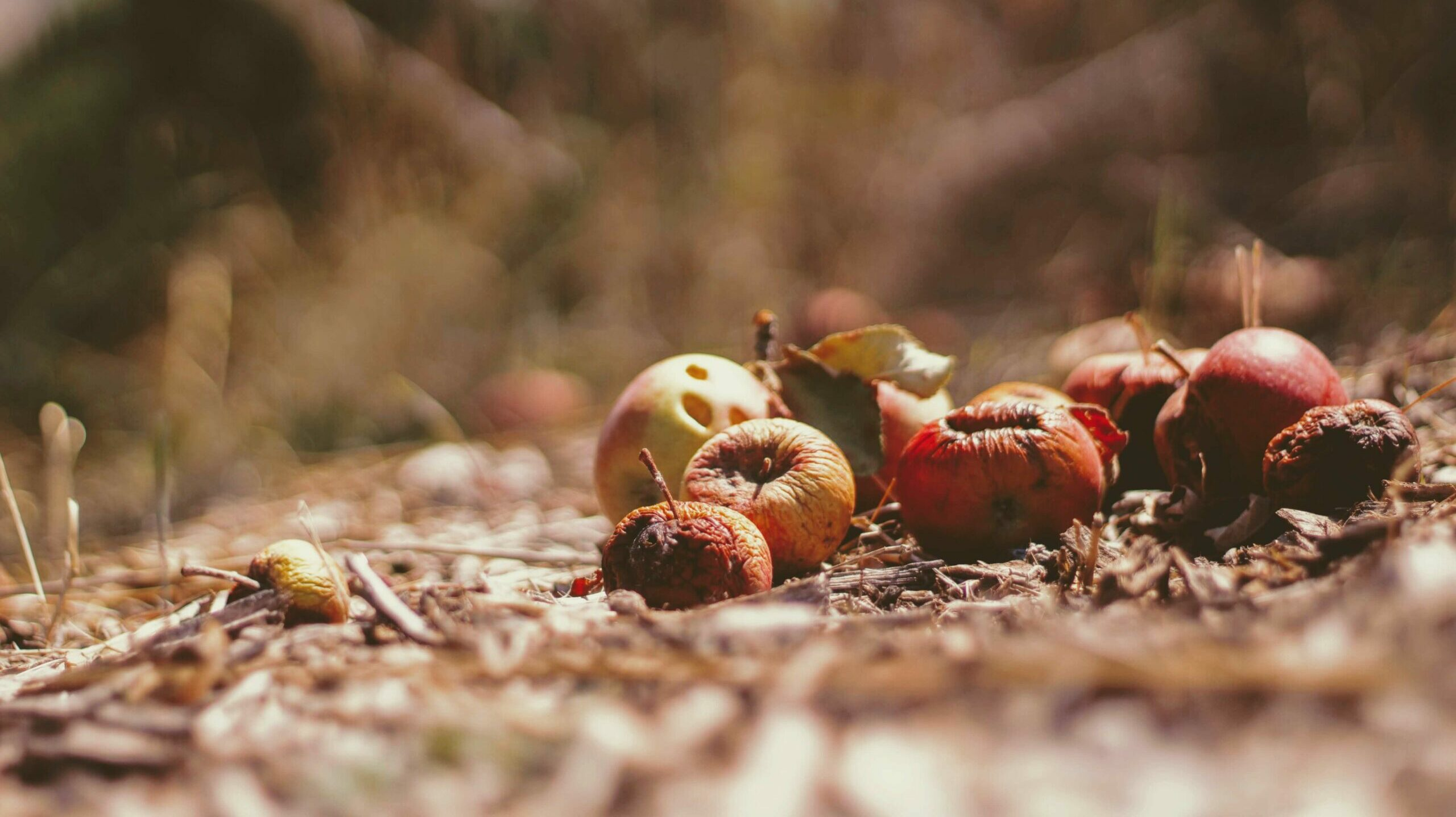 fruits decomposing in soil