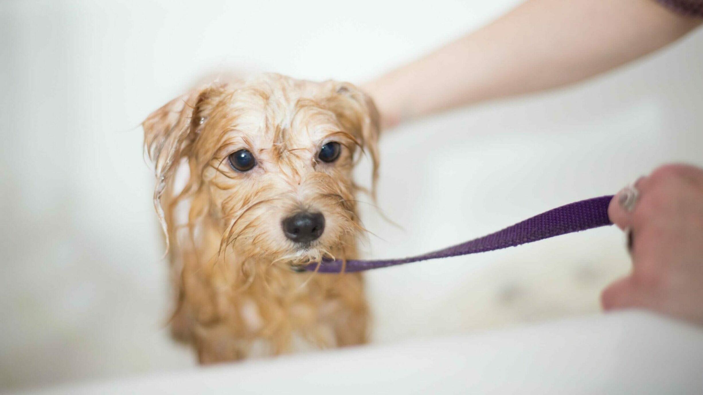dog getting bathed in a tub