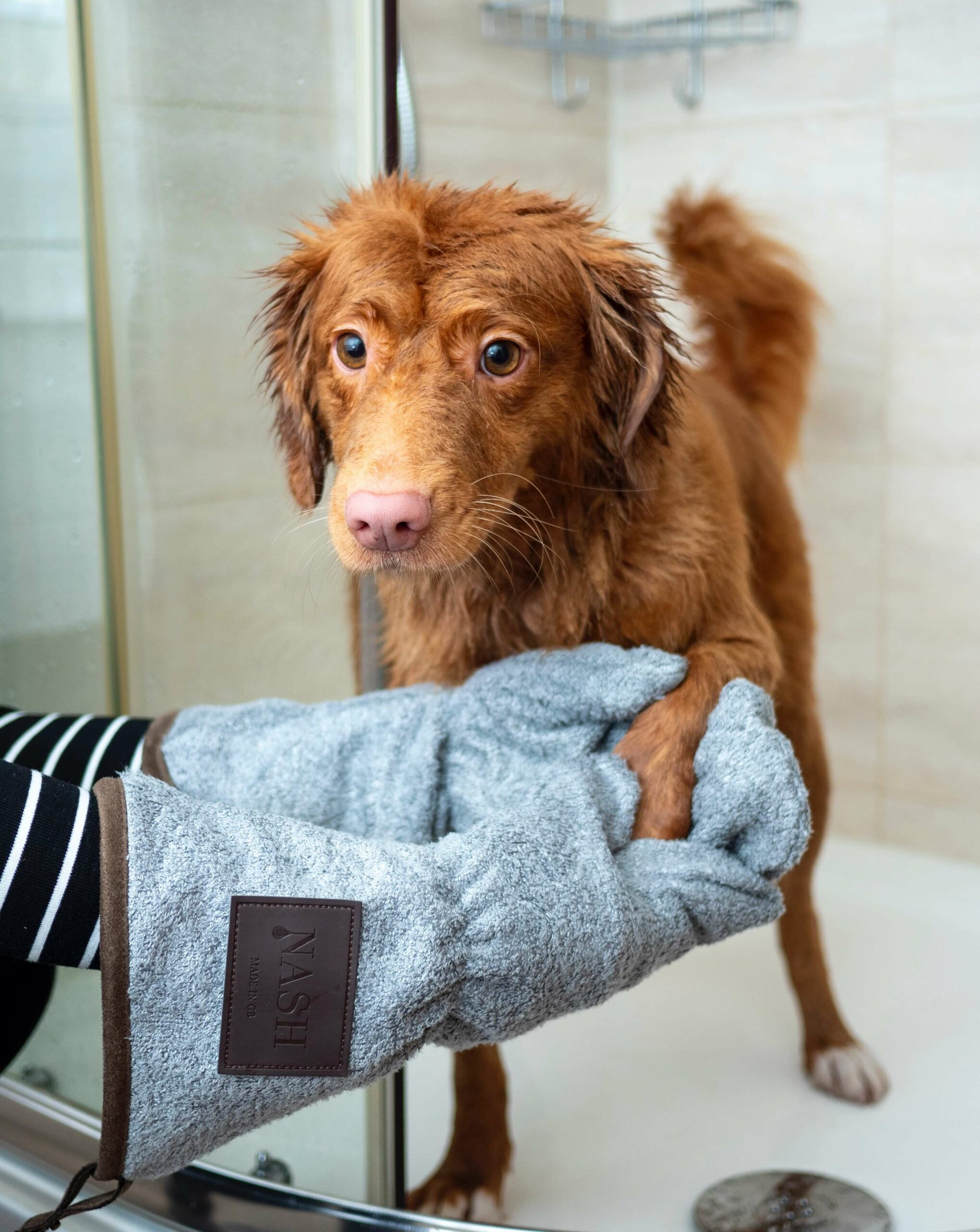 How to Wash a Dog without Making a Mess: 5 Easy Tips