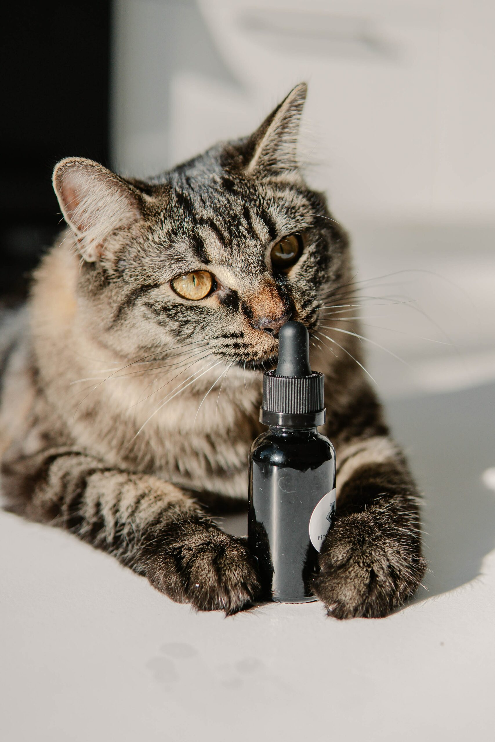 CBD Cat Treats: Your Complete Guide to How and When to Use Them
