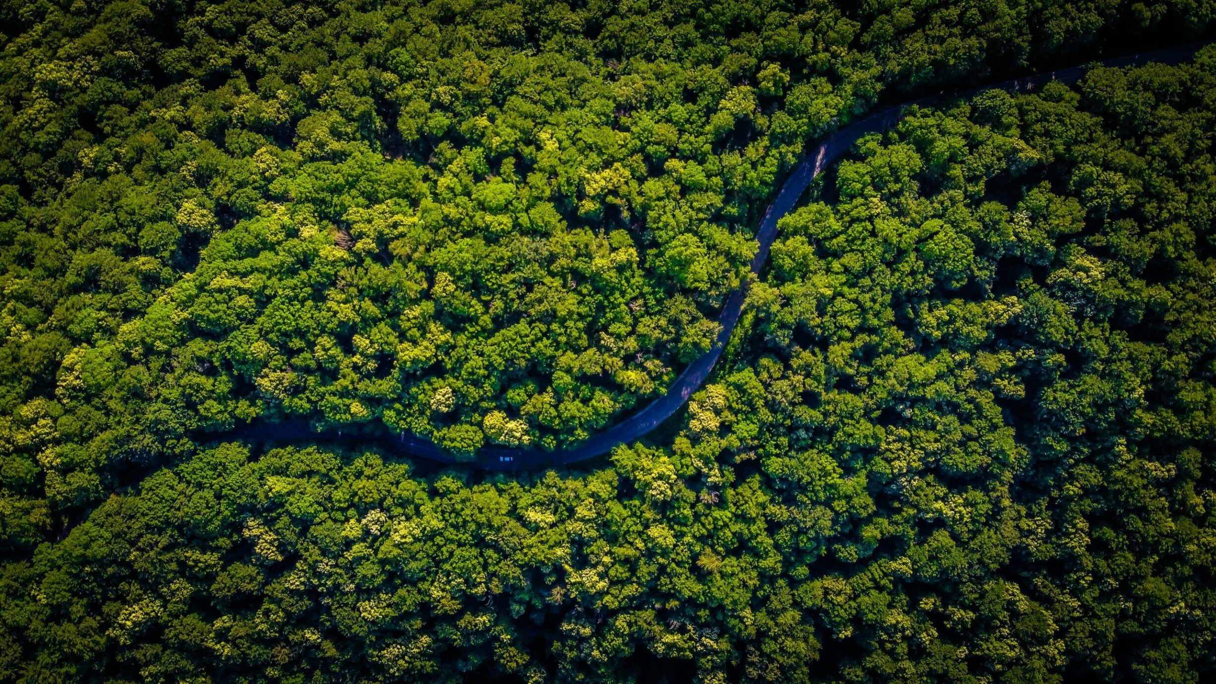 overhead photo of trees in rainforest